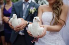 Организация свадеб: Запуск голубей после регистрации брака